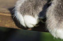 Gato araña muebles: cómo evitar que lo haga