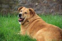 Top 10 de las enfermedades relacionadas con la obesidad en perros y gatos