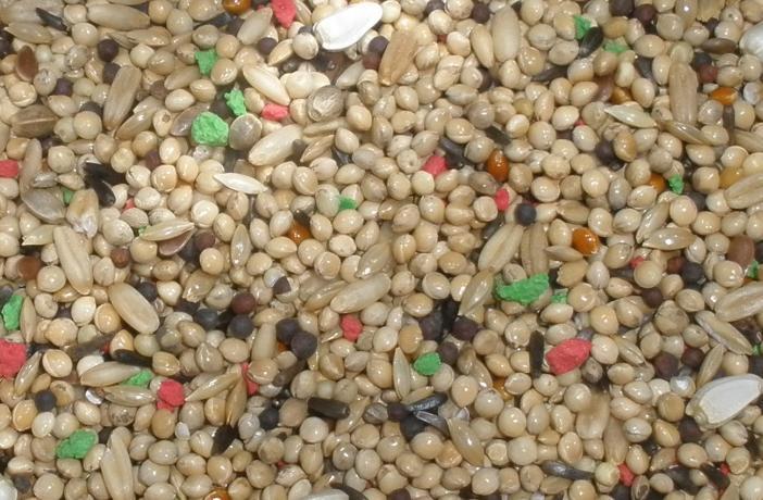 Figura 2. Las dietas basadas en semillas con un alto contenido en grasa estimulan la producción de huevos en aves mascota.