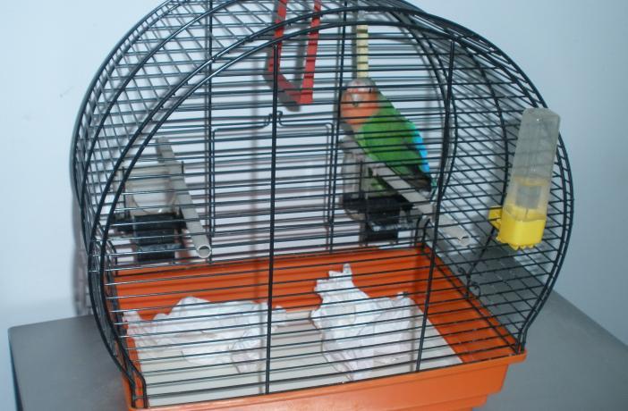 Figura 3. El papel y otros sustratos fibrosos colocados en el fondo de la jaula pueden ser utilizados para fabricar el nido.