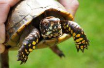 Manejo básico de reptiles en la clínica veterinaria