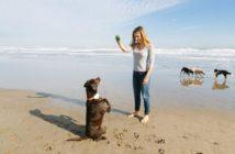 Gosi desarrolla un geolocalizador de mascotas