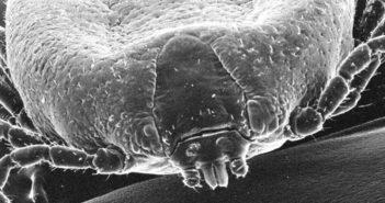 Dermatosis parasitarias caninas y felinas