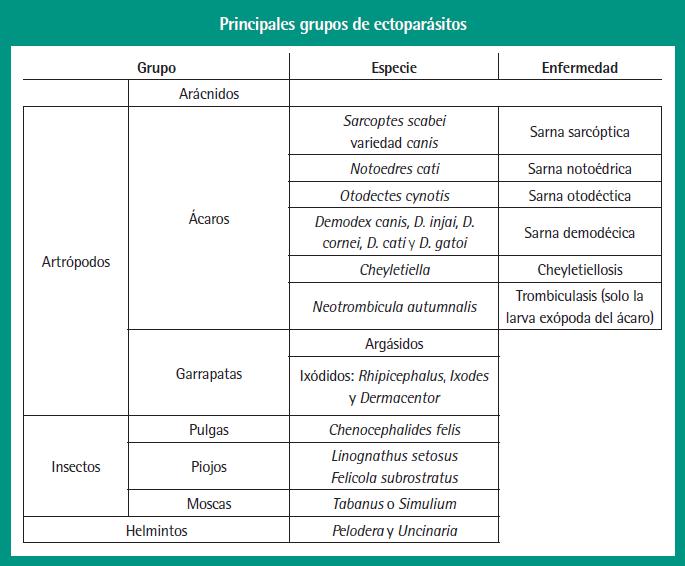 Principales grupos de ectoparásitos