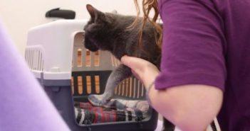 Viajar con gatos: ¿cómo evitar que se estresen en el coche en vacaciones?