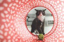 Cómo prepara la llegada de un gato a casa: información para el propietario