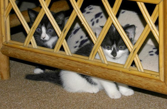 No hay que forzar al gato a que salga de su zona segura