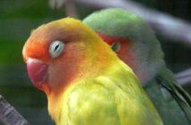 Manejo de las aves en la clínica veterinaria: lo más básico