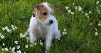 10 plantas tóxicas para los perros muy comunes