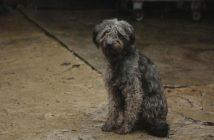 115.000 perros y gatos abandonados en España en 2016
