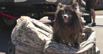 Documentación para viajar con la mascota: ¿qué es necesario en la Unión Europea?