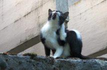 Dermatosis parasitarias en perros y gatos producidas por ácaros
