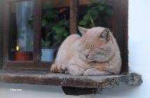 Tratamiento del gato obeso