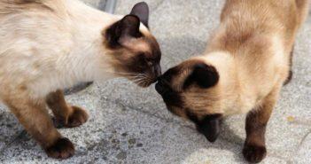 ¿A qué se debe el marcaje felino?