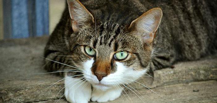 Características nutricionales del gato