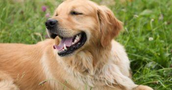 Manejo de la epilepsia canina