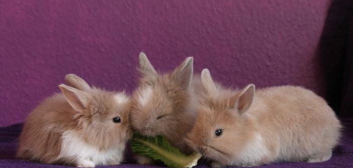 Particularidades del sistema digestivo de los conejos