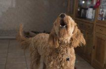 Trastornos compulsivos en perros y gatos