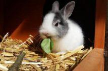 Prevención de problemas dentales y digestivos en conejos