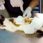 Ozonoterapia en mascotas
