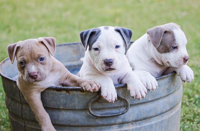 Rutina de higiene para perros | Best for Pets