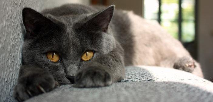 problemas de ansiedad en gatos