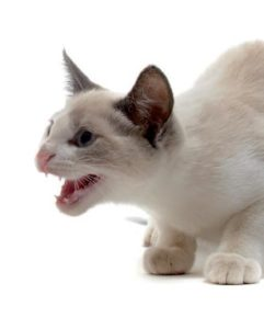 Problemas de agresividad en el gato