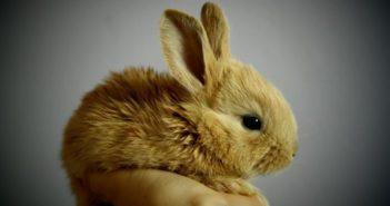 Necesidades básicas del conejo doméstico