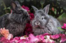 Las relaciones sociales en el conejo doméstico