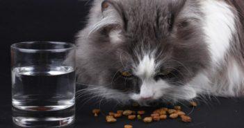 Alimentos para reducir el estrés