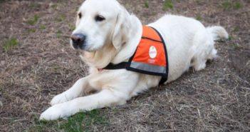 Fundación Affinity dedica el año a concienciar sobre #AnimalesQueCuran