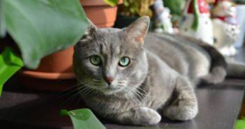 Diagnóstico de las alergias en gatos