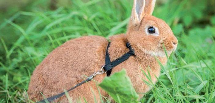 Situaciones de estrés en el conejo doméstico