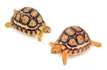 Principales patologías de los reptiles
