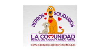 100x100 perros solidarios