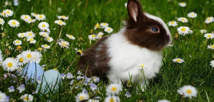Bases nutricionales del conejo de compañía
