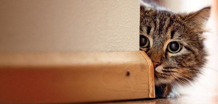 Manejo hospitalario del paciente felino