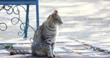 Preguntas sobre la nutrición felina