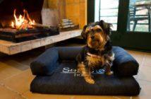Sercotel Hotels y wiPet facilitan los viajes con mascotas