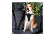 Arnés para coche Dog Protect