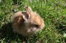 La fibra en el conejo