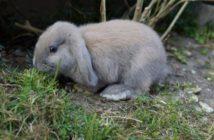 Carbohidratos, grasas y proteínas en la alimentación del conejo