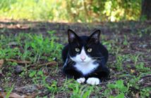 Cuadro clínico, diagnóstico y tratamiento de la inmunodeficiencia felina