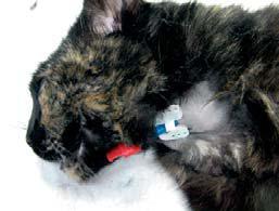 Fluidoterapia en pacientes con shock