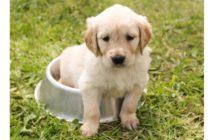 Alteraciones alimentarias del cachorro