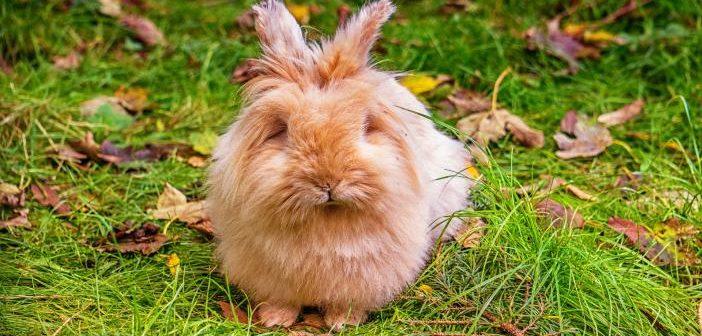 Disbiosis en conejos