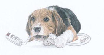 Electrocución en mascotas