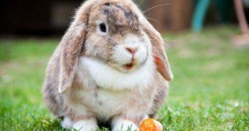 Minerales en conejos