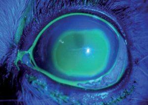 El paciente oftalmológico en el quirófano