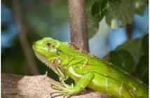 Manejo de heridas en reptiles